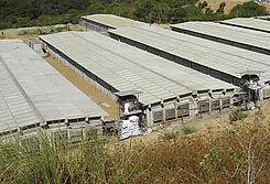 Venvi Agri บริษัทสัญชาติฟิลิปปินส์ ได้ดำเนินฟาร์มแม่พันธุ์ที่ติดตั้งระบบควบคุมสภาพอากาศสำหรับ