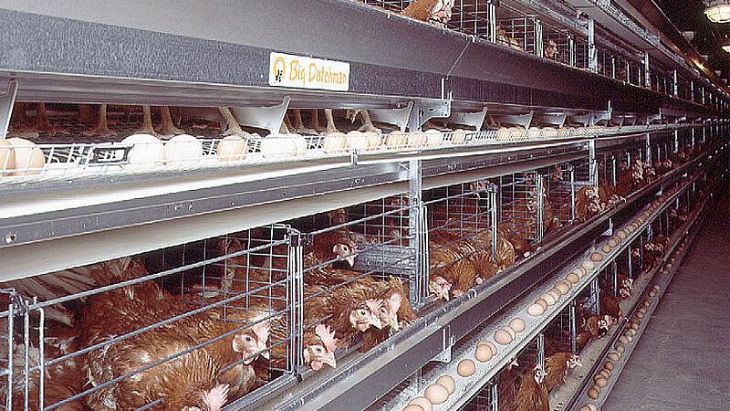 การเลี้ยงไก่ไข่ด้วยกรง UNIVENT
