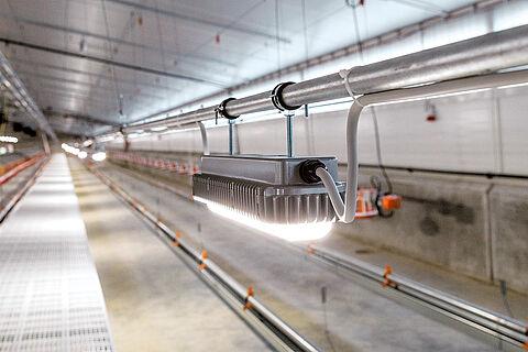 ระบบแสงสว่างในโรงเรือนเลี้ยงไก่