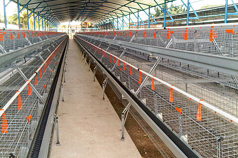 SuperDoubleDeck and SuperTripleDeck poultry cages