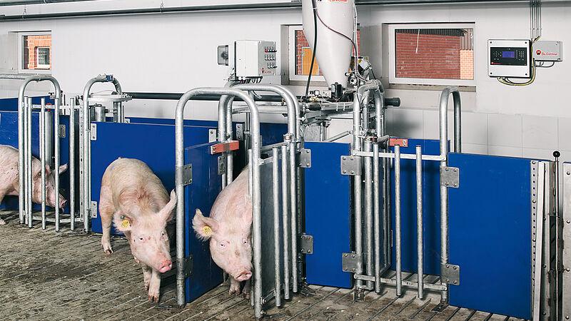 ระบบให้อาหาร Callmatic 2 สำหรับแม่พันธุ์ (โรงเรือนที่จัดการการเลี้ยงแบบกลุ่ม)