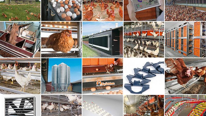การผลิตไข่ที่ทันสมัย