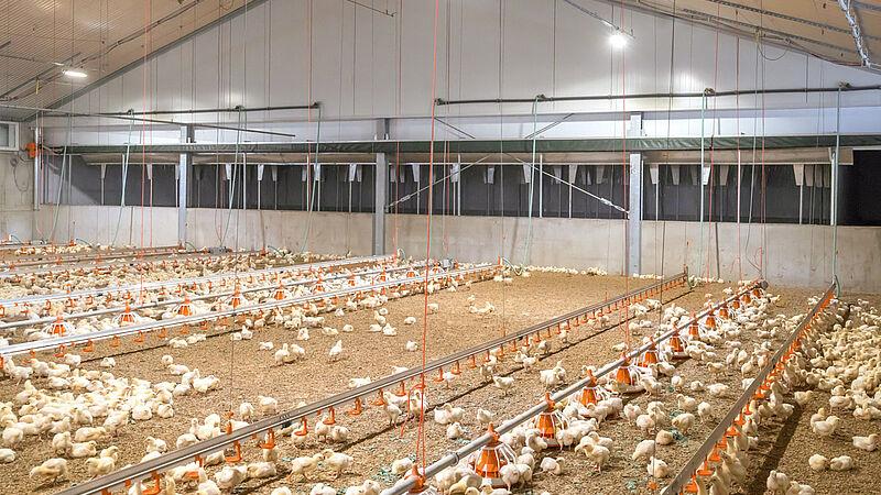 บำบัดอากาศเสียด้วย Pollo-M สำหรับโรงเรือนลูกไก่