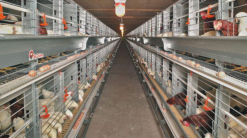 การเลี้ยงไก่พ่อ-แม่พันธุ์ (เพื่อสร้างไข่) ด้วย EUROVENT-Parents