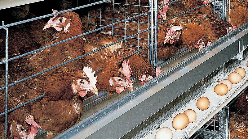 กระบวนการจัดการไข่ด้วยกรง UNIVENT