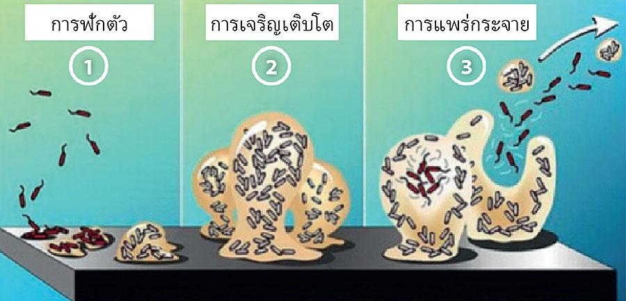 Три знімка